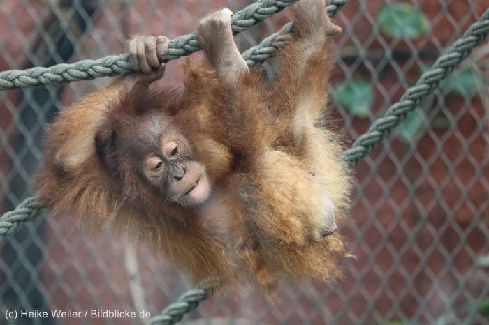 Zoo_Dortmund_100715_IMG_6707
