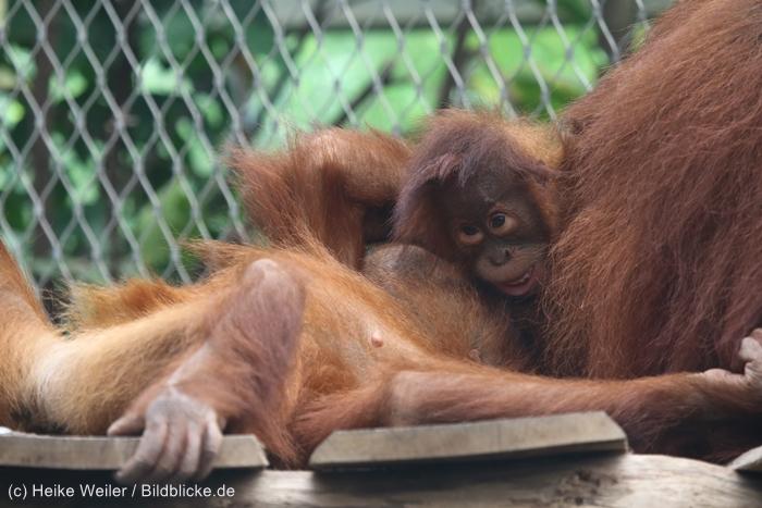 Zoo_Dortmund_100715_IMG_6738