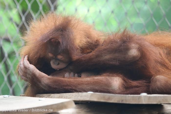 Zoo_Dortmund_100715_IMG_6774