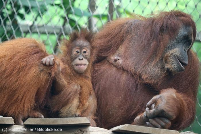 Zoo_Dortmund_100715_IMG_6881