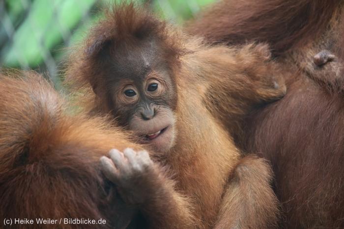 Zoo_Dortmund_100715_IMG_6889