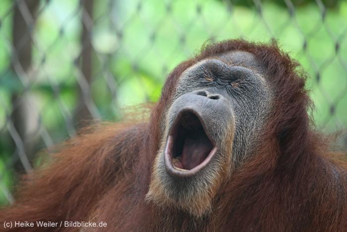 Zoo_Dortmund_100715_IMG_6893
