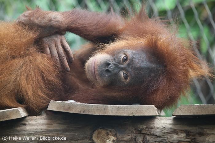 Zoo_Dortmund_100715_IMG_6938