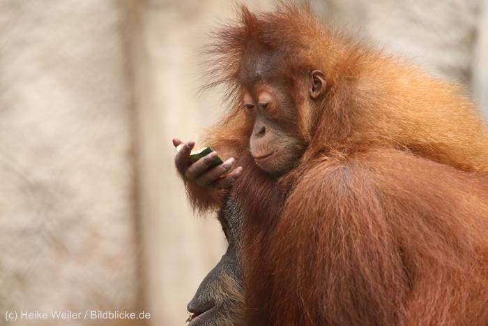 Zoo_Dortmund_100715_IMG_6991