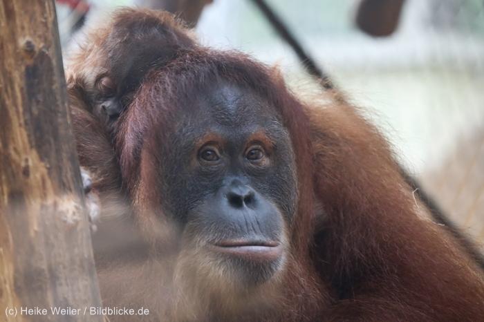 Zoo_Dortmund_100715_IMG_7020
