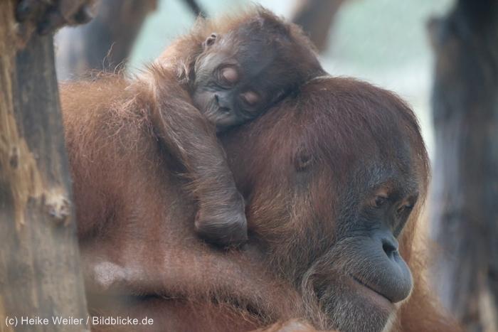 Zoo_Dortmund_100715_IMG_7022