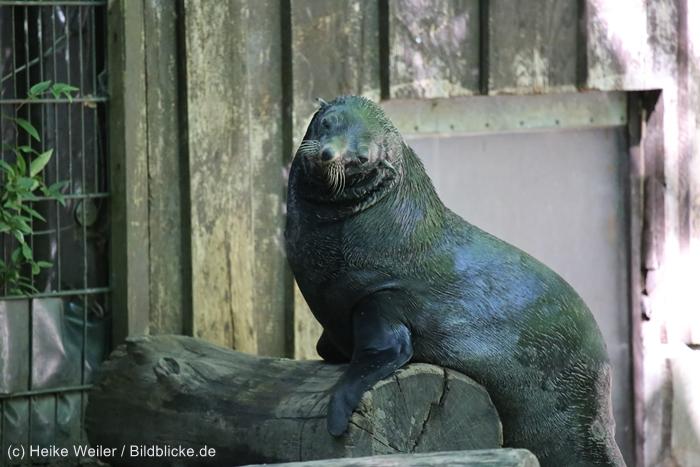 Zoo_Dortmund_100715_IMG_7060