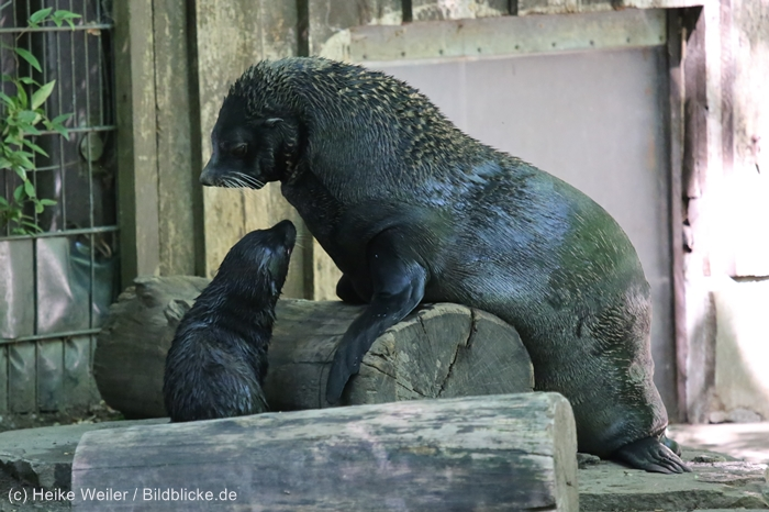 Zoo_Dortmund_100715_IMG_7062
