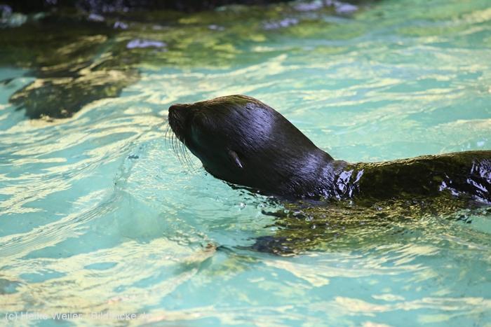 Zoo_Dortmund_100715_IMG_7104