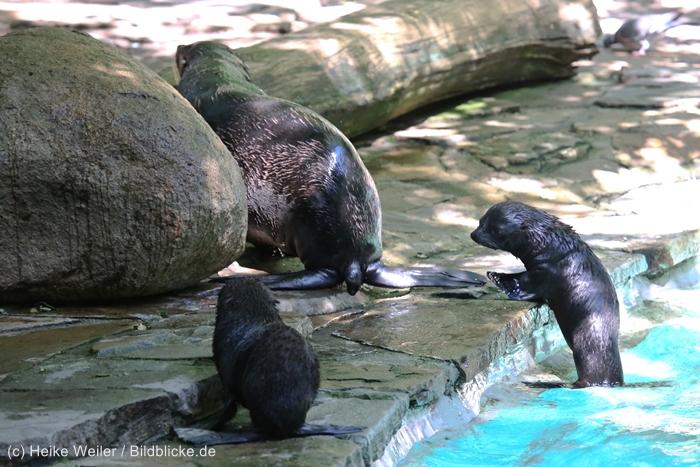 Zoo_Dortmund_100715_IMG_7123