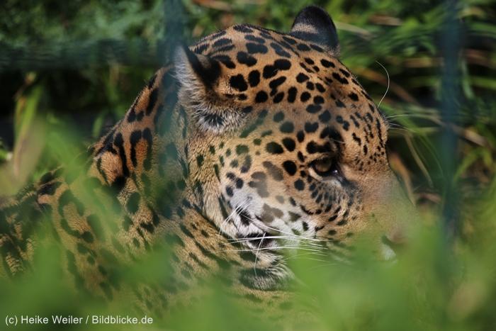 Zoo_Dortmund_100715_IMG_7182