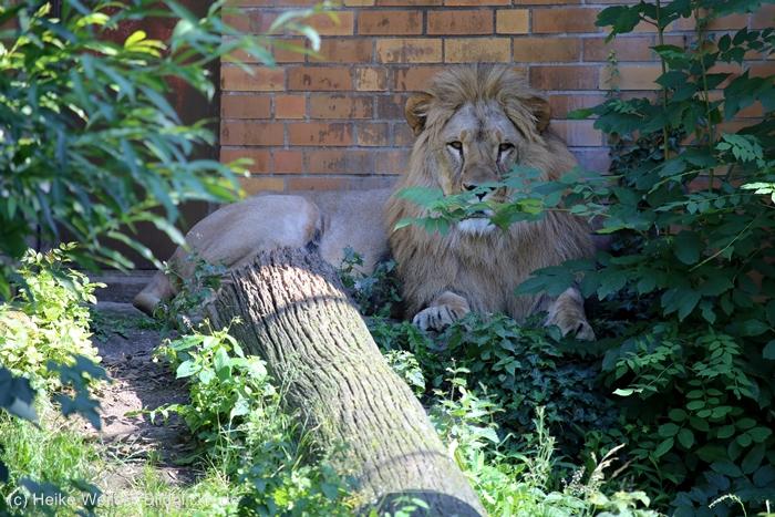 Zoo_Dortmund_100715_IMG_7198