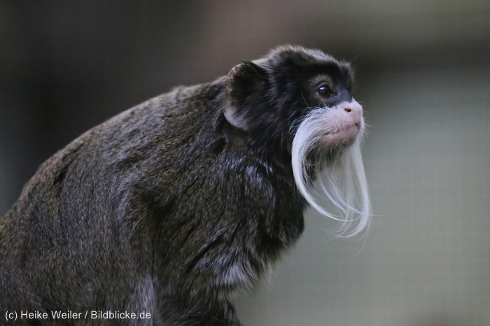 Zoo_Dortmund_100715_IMG_7207