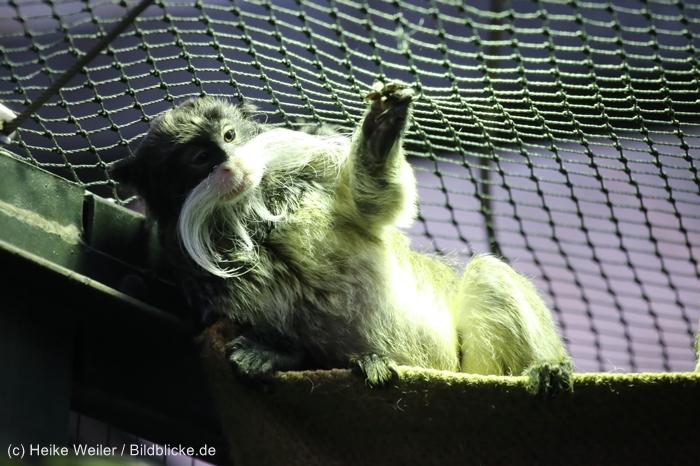 Zoo_Dortmund_100715_IMG_7225