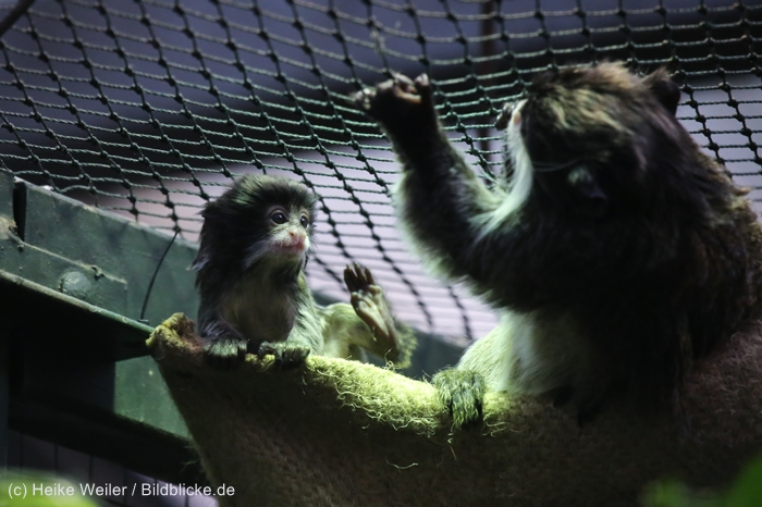 Zoo_Dortmund_100715_IMG_7231