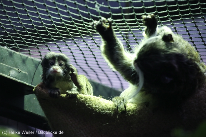 Zoo_Dortmund_100715_IMG_7240