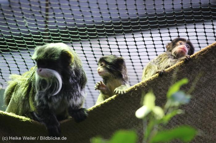 Zoo_Dortmund_100715_IMG_7278