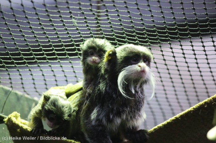 Zoo_Dortmund_100715_IMG_7285