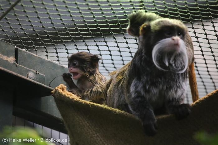 Zoo_Dortmund_100715_IMG_7292