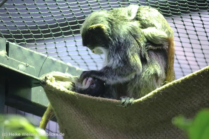 Zoo_Dortmund_100715_IMG_7298