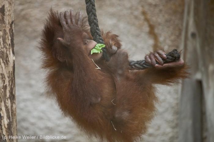 Zoo_Dortmund_100715_IMG_7307