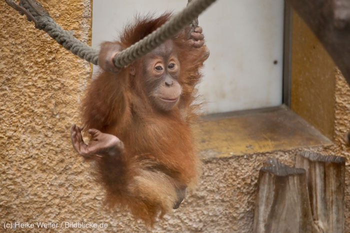 Zoo_Dortmund_100715_IMG_7315