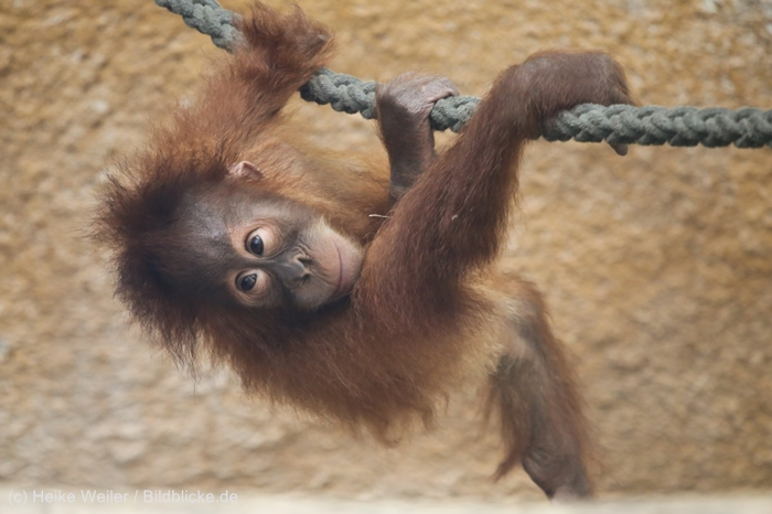 Zoo_Dortmund_100715_IMG_7318