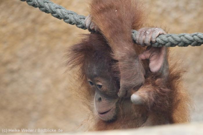 Zoo_Dortmund_100715_IMG_7324