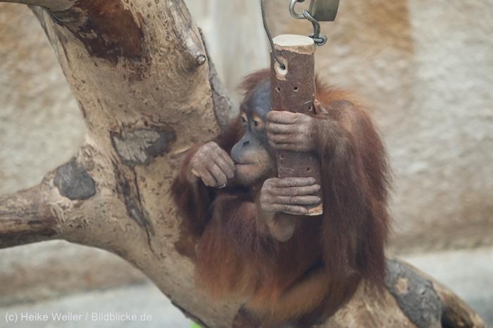 Zoo_Dortmund_100715_IMG_7327