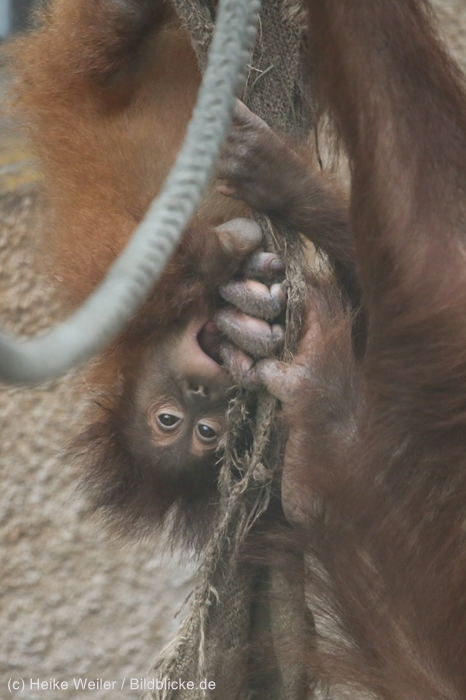 Zoo_Dortmund_100715_IMG_7333