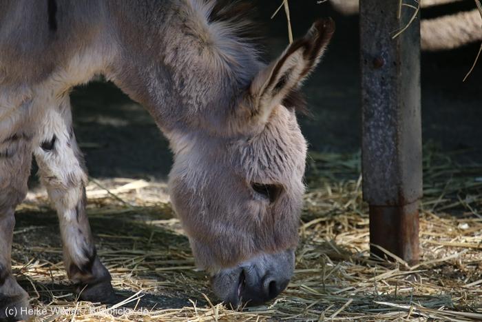 Zoo_Dortmund_100715_IMG_7335