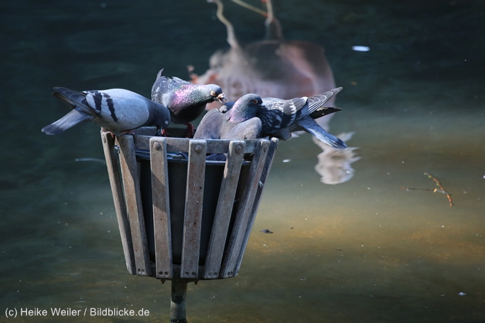 Zoo_Dortmund_100715_IMG_7337