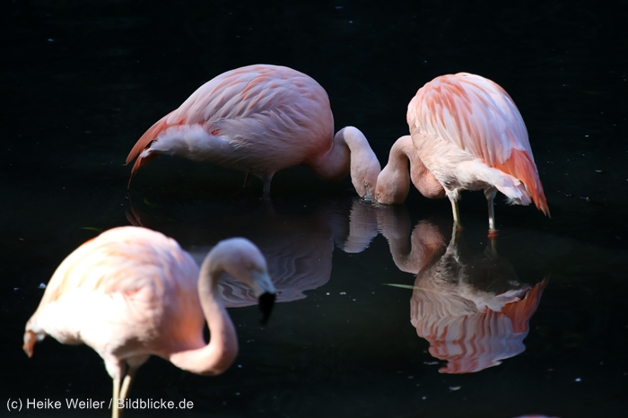 Zoo_Dortmund_100715_IMG_7342