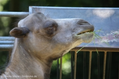 Zoo_Dortmund_100715_IMG_6643