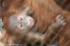 Zoo_Dortmund_100715_IMG_6656