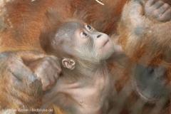Zoo_Dortmund_100715_IMG_6659