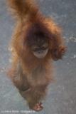 Zoo_Dortmund_100715_IMG_6662