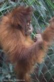 Zoo_Dortmund_100715_IMG_6697