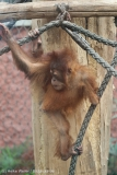 Zoo_Dortmund_100715_IMG_6706