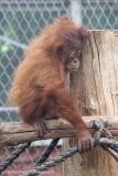 Zoo_Dortmund_100715_IMG_6711