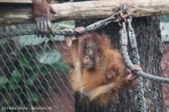 Zoo_Dortmund_100715_IMG_6723
