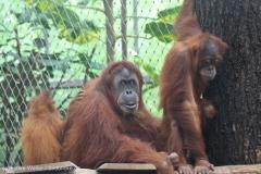 Zoo_Dortmund_100715_IMG_6727