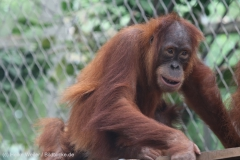 Zoo_Dortmund_100715_IMG_6731