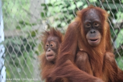 Zoo_Dortmund_100715_IMG_6733