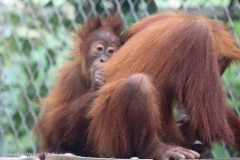 Zoo_Dortmund_100715_IMG_6735