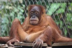 Zoo_Dortmund_100715_IMG_6737