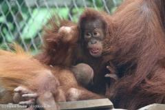 Zoo_Dortmund_100715_IMG_6743