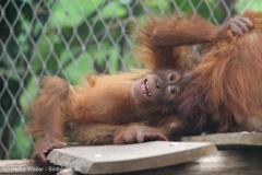 Zoo_Dortmund_100715_IMG_6755