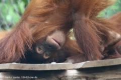 Zoo_Dortmund_100715_IMG_6781