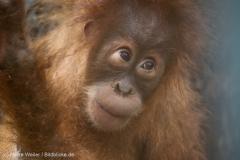 Zoo_Dortmund_100715_IMG_6807